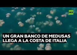 Enlace a Costas italianas se llenan de medusas gigantes