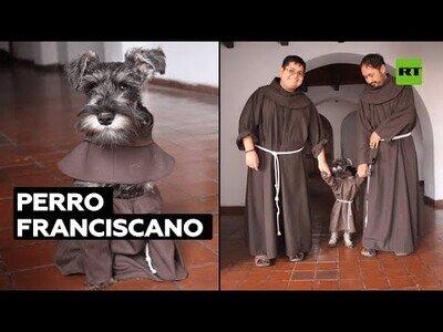El perro franciscano que vive en un convento