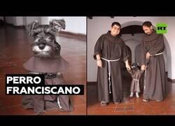 Enlace a El perro franciscano que vive en un convento