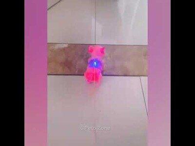 El vídeo que confirma que los gatos son el origen de todo mal