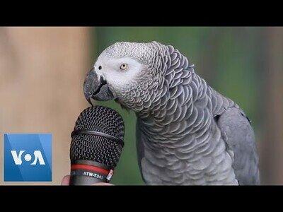 La mejor entrevista a un loro que verás hoy