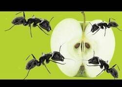 Enlace a ¿Qué le harán las hormigas a una manzana durante 24 horas?