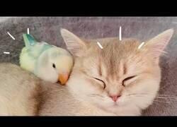 Enlace a ¿Quién dijo que los gatos y los pájaros se llevan mal?