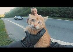 Enlace a Ciclista y varios conductores salvan a un gato que se encontraba en mitad de la carretera