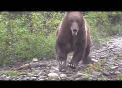 Enlace a Cuando un oso corre hacia tí, pero dejar de grabar no es una opción
