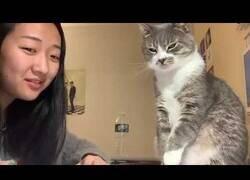 Enlace a Cuando tu gato odia escucharte