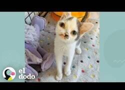 Enlace a El gatito que nació con el morro torcido