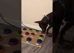 Enlace a Stella, el perro que se comunica a través de botones