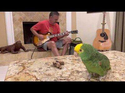 Poniendo base de guitarra al canto de un loro
