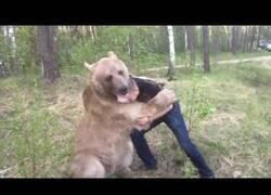 Enlace a Un ruso juega a pelearse con un oso pardo