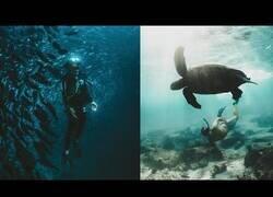 Enlace a Descubriendo las Islas Galápagos