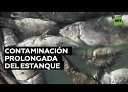 Enlace a Aparecen millones de peces muertos en la orilla de un lago artificial en Líbano