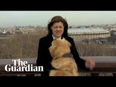 Un perro se lleva el micro de una reportera en pleno directo
