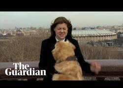 Enlace a Un perro se lleva el micro de una reportera en pleno directo