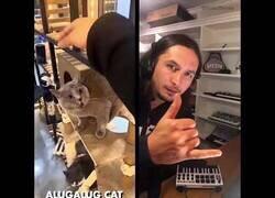 Enlace a Creando un temazo a partir de un extraño maullido de un gato