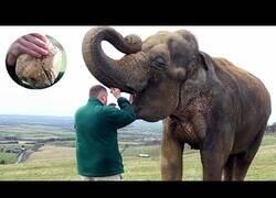Enlace a Así se extirpa un diente a un elefante