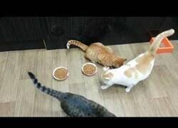 Enlace a El gato que ni comía ni dejaba comer