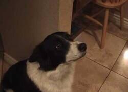 Enlace a Un perro aprendiendo a saludar