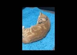 Enlace a El gato que sabe decir