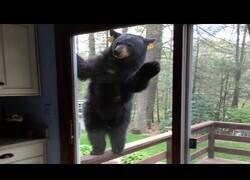 Enlace a El oso, ese animal que entra allí donde quiere