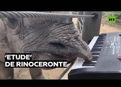 Enlace a Un rinoceronte compone una pieza de piano