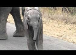 Enlace a Una mamá elefante no deja que su cría se acerque al cámara