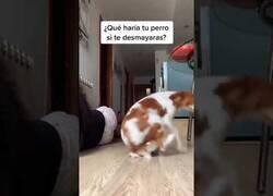 Enlace a ¿Qué haría tu perro si te desmayaras?