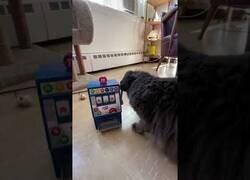Enlace a Un gato intenta hacer funcionar una máquina de M&M