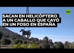 Enlace a Sacan en helicóptero a un caballo atrapado en un foso