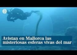 Enlace a Avistan en Mallorca unas extrañas 'esferas vivas'