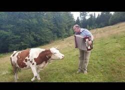 Enlace a La vaca a la que le gustaba el acordeón