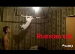 Enlace a Un gato ruso no es como los gatos comunes