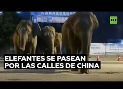 Enlace a Una manada de elefantes se pasea por las calles de China