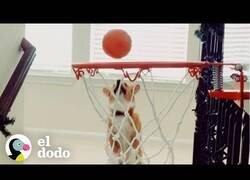 Enlace a La perrita a la que se le daba bien jugar al baloncesto