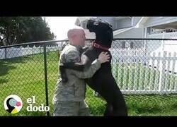 Enlace a Así son recibidos por sus perros estos soldados al volver a casa