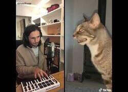 Enlace a Si The Weeknd y un gato resfriado hicieran una colaboración