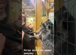 Enlace a El mapache que busca que todo esté en orden
