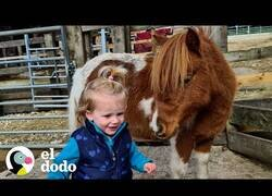 Enlace a El mejor amigo de esta niña de 2 años es un pony
