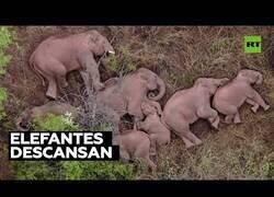 Enlace a Una manada de elefantes descanasa tras recorres 500 kilómetros