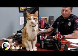 Enlace a Este gato es el supervisor de la comisaría de policía
