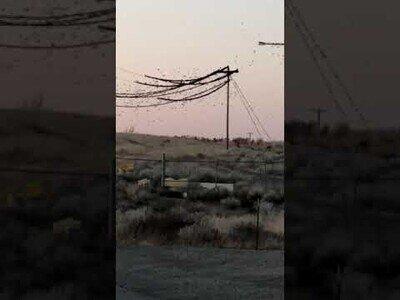 Miles de pájaros hacen colapsar un sistema de cableado