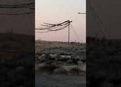 Enlace a Miles de pájaros hacen colapsar un sistema de cableado