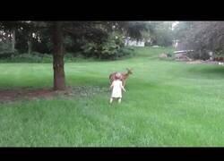 Enlace a Niña pequeña se pone a jugar con un ciervo