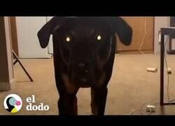 Enlace a El perro al que le encanta aterrorizar a su dueño