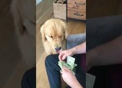 Enlace a El perro contable que te ayuda a contar tu dinero