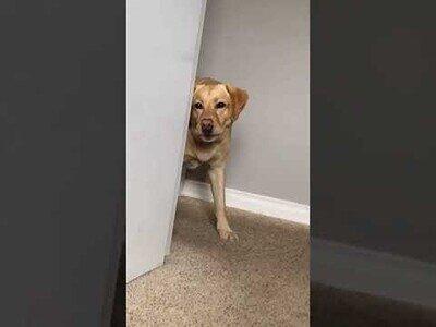 La reacción de un perro al ver una estatua suya