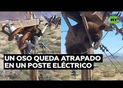Enlace a Rescatan a oso atrapado en un poste eléctrico