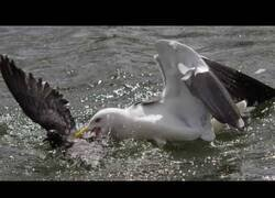 Enlace a La gaviota que comía palomas