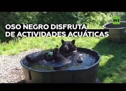 Enlace a Un oso se divierte y se relaja en una bañera