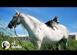 Enlace a El perro al que le encantaba montar a caballo